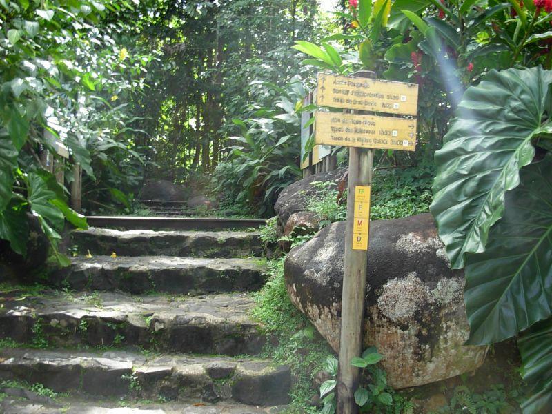 Sentier maison de la foret guadeloupe